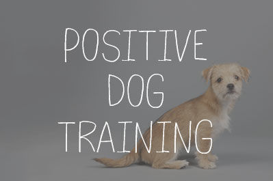 Dog Training & Behaviour