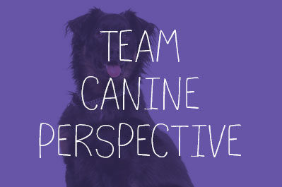Team Canine Perspective