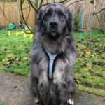 Canine Perspective CIC Fleece Dog Harness