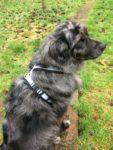 Fleece Dog Harness EDogz