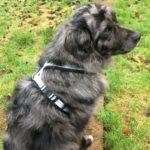 EDogz Fleece Dog Harness