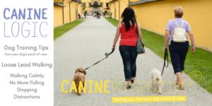 Downloadable Dog Training Loose Lead Walking