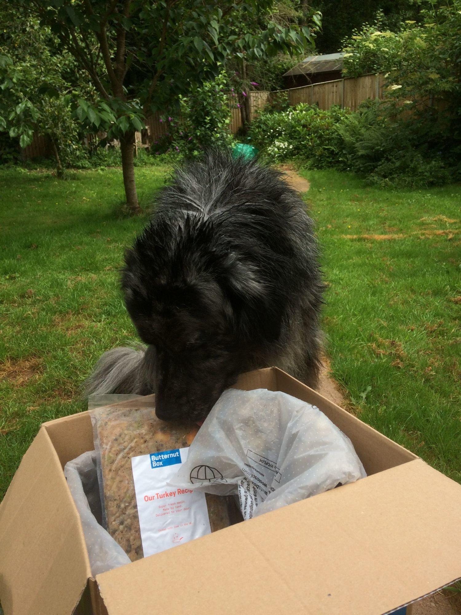 Butternut Box Fresh Dog Food