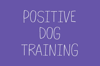 Our Favourite Dog Training Tips on YouTube