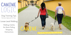 Downloadable Dog Training Loose Lead Walking
