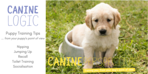 Free Puppy Training Tips Leaflet