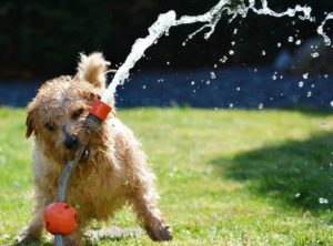 heatstroke dog