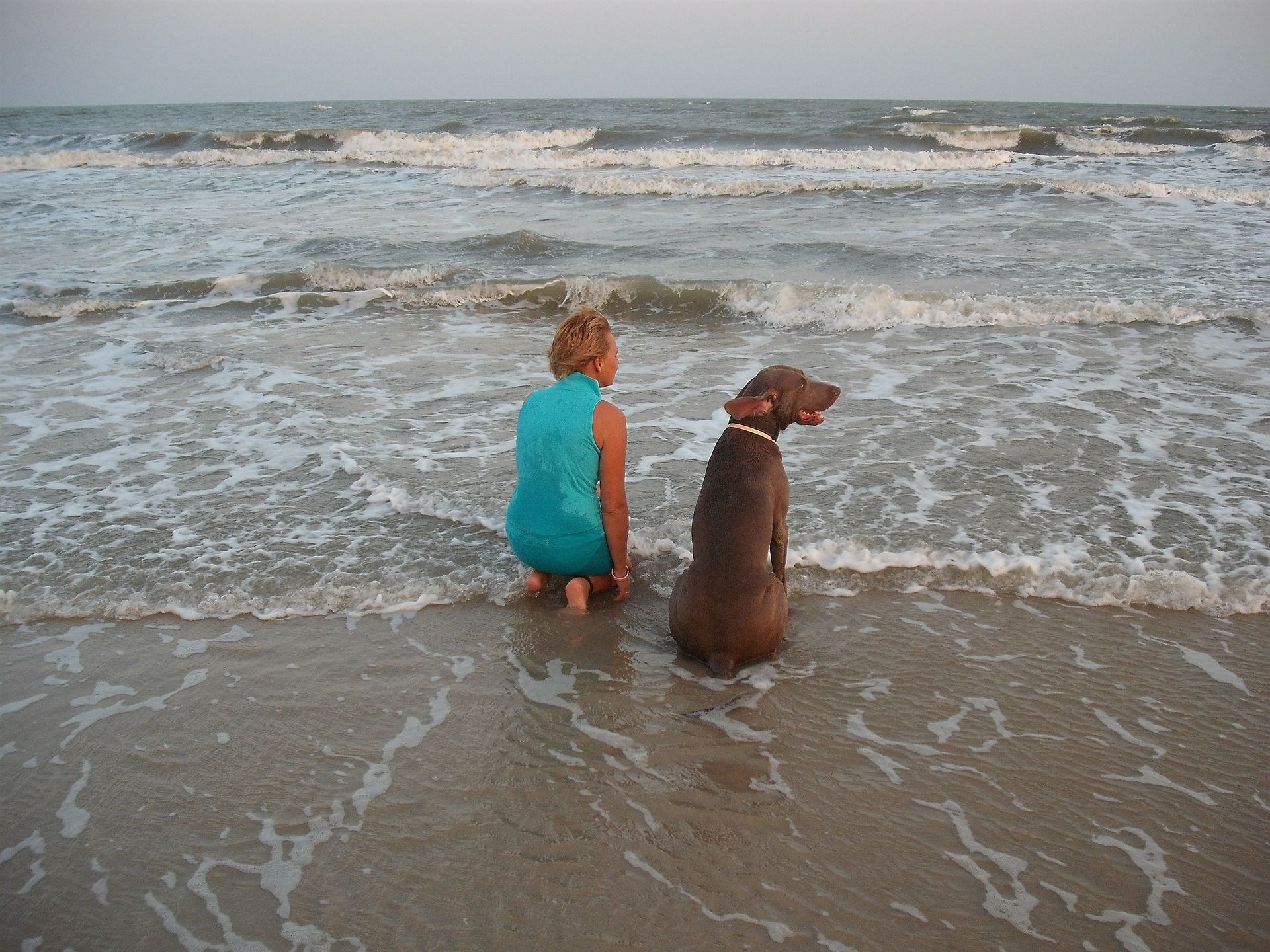 Protected: Your Dog & Motivation