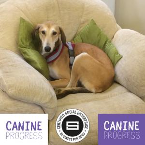 Caninr Progress for Life Resilience Training Entrepreneurs