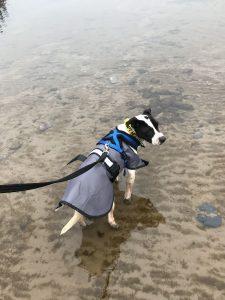 Hilbrae Rescue