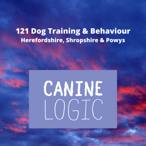 121 Dog Training & Behaviour Herefordshire, Shropshire & Powys