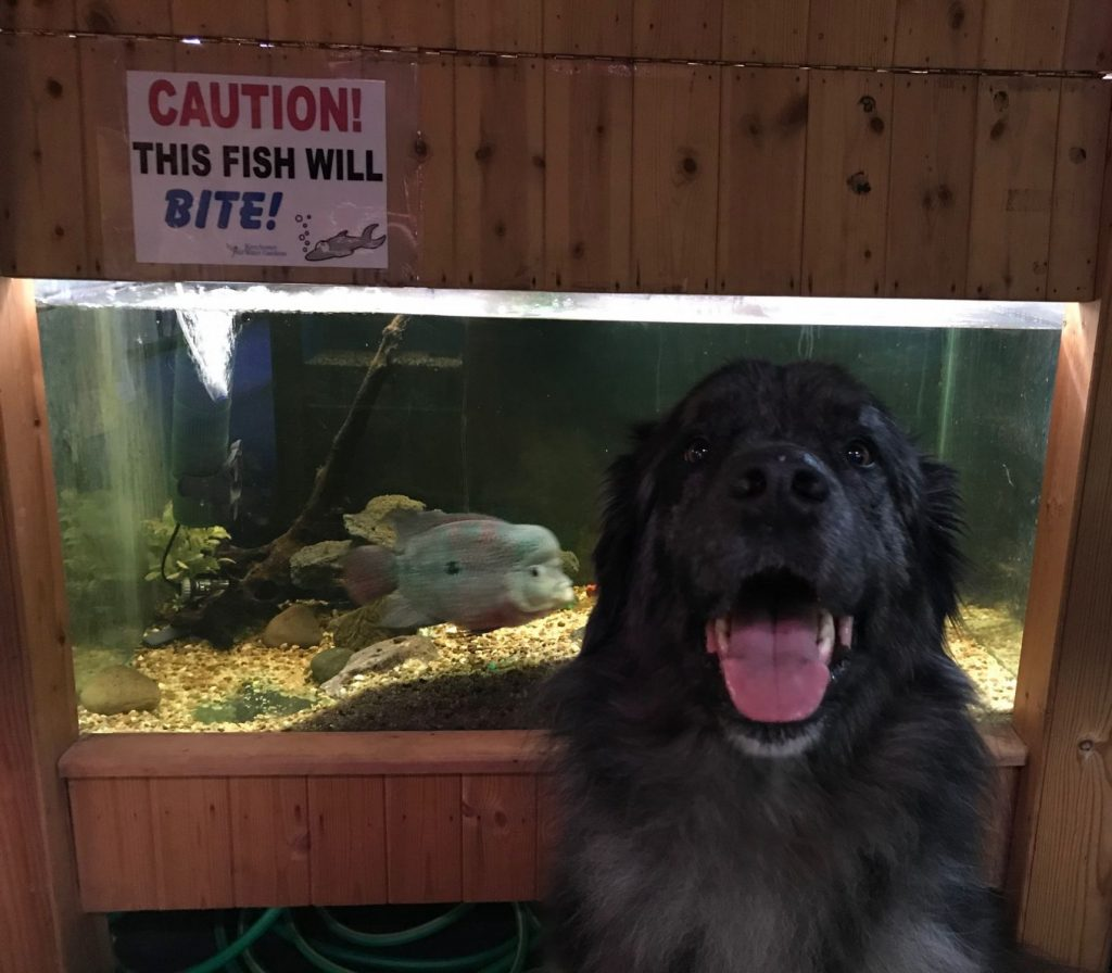 Dog Bite Fish Bite