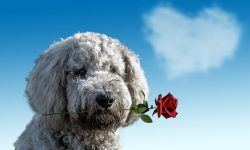 love-dogs-valentines-day