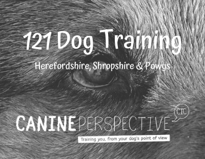 121 Dog Training & Behaviour Sessions