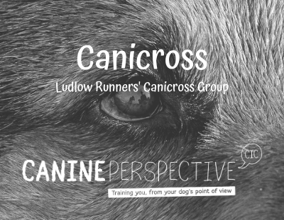 Canicross Canine Perspective CIC