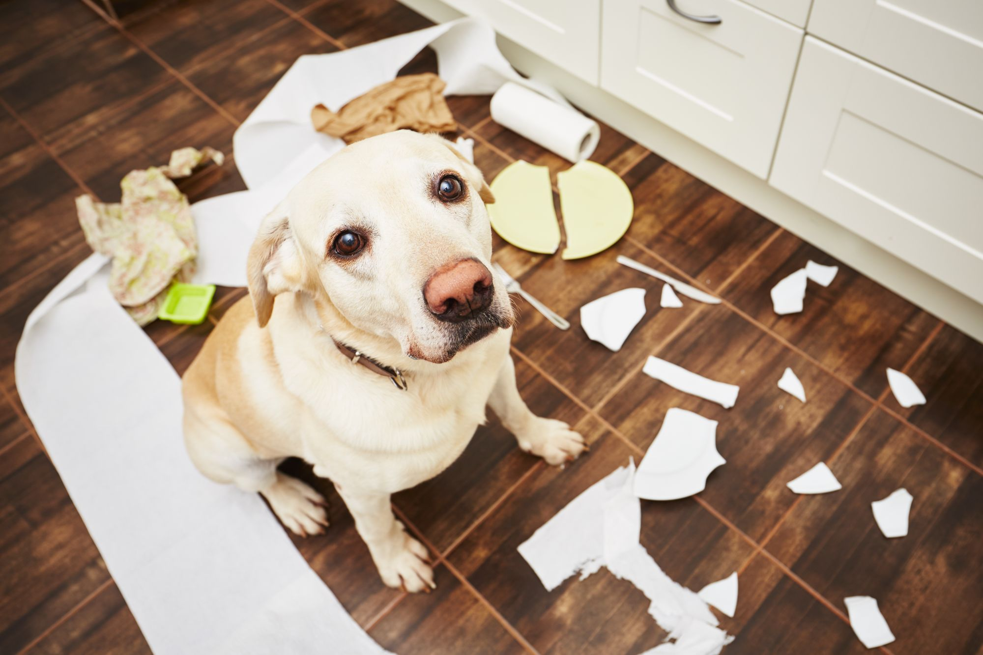 Protected: Your Dog's Teenage Chewing Phase